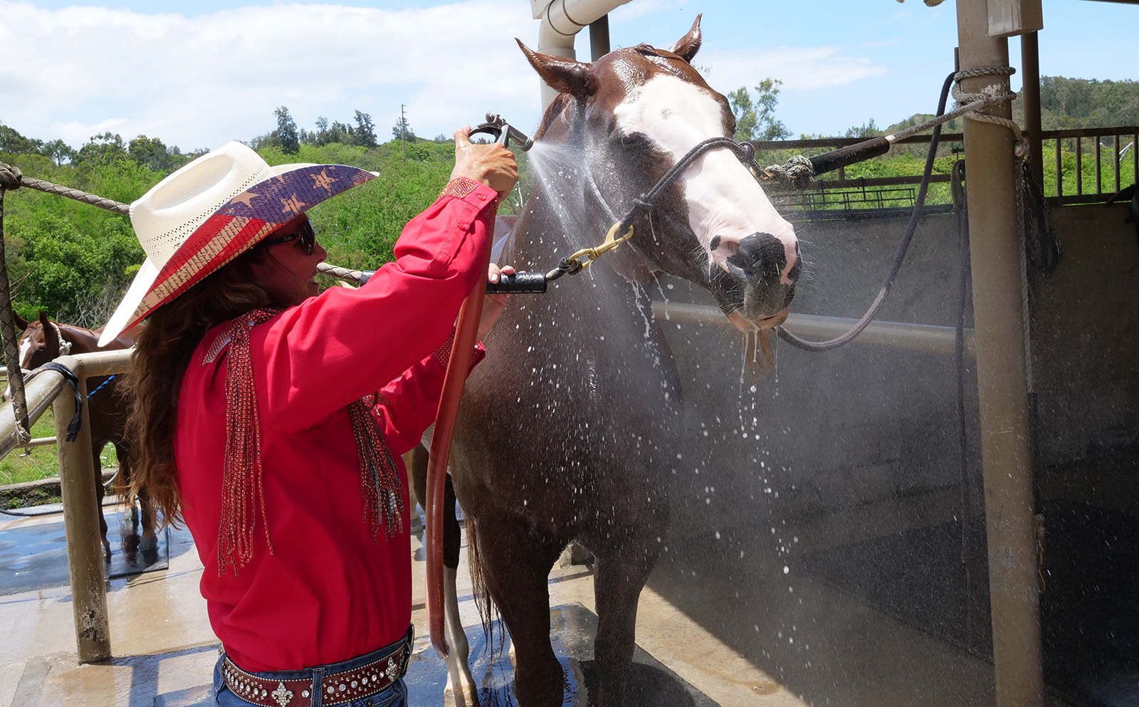<p>Heather Gibson showers her horse to cool him down after a competitive run.</p>