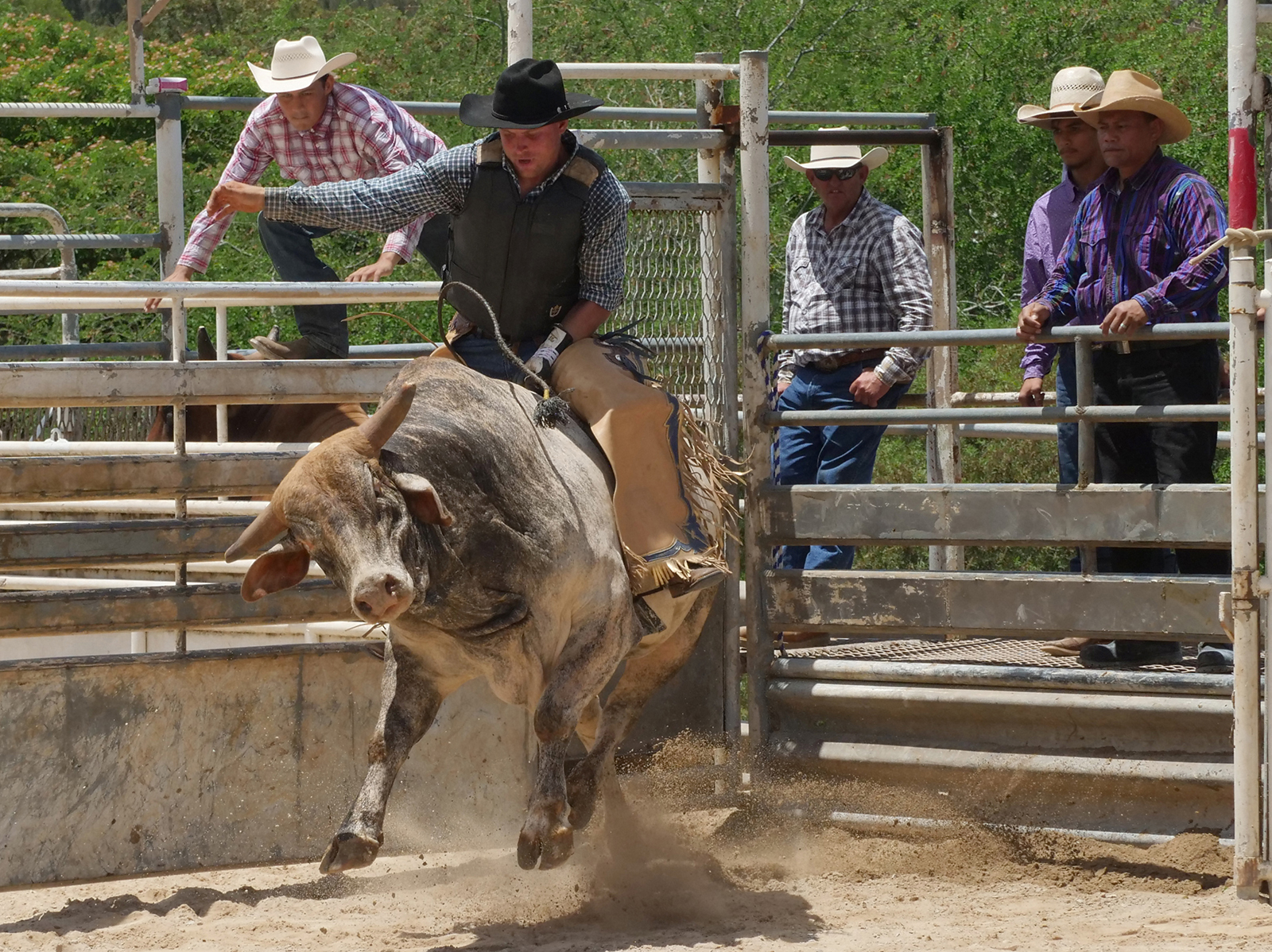 <p>A rider and a bull enter the arena. To receive a score, riders must stay atop the bulls for eight full seconds while holding on with only one hand and without touching the bull or themselves with their free hand.</p>