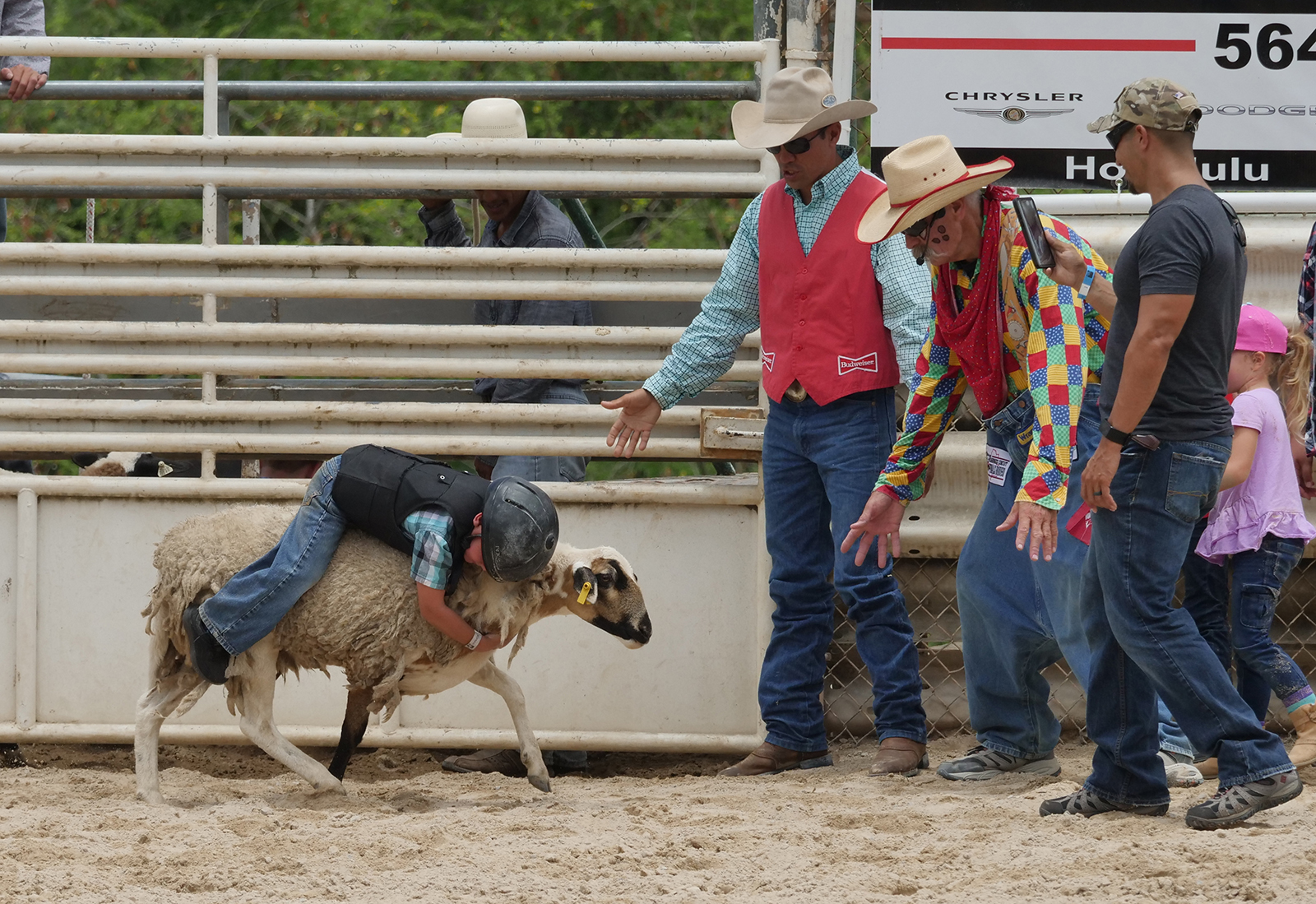 <p>A future cowboy clings to a sheep in the mutton busting event where keiki compete to see who can stay on board the longest.</p>