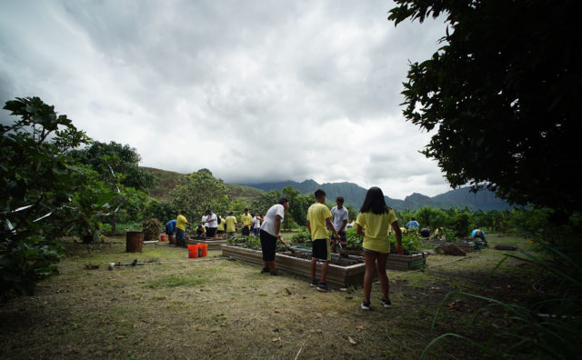 Students in assisting in tending to Ma'o Farms in Waianae.