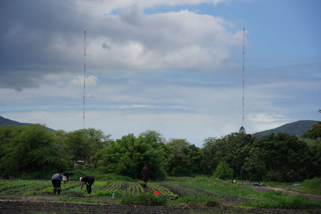 Farmers at Ma'o farms work in the field with the USN VLF Lualualei base in the background.