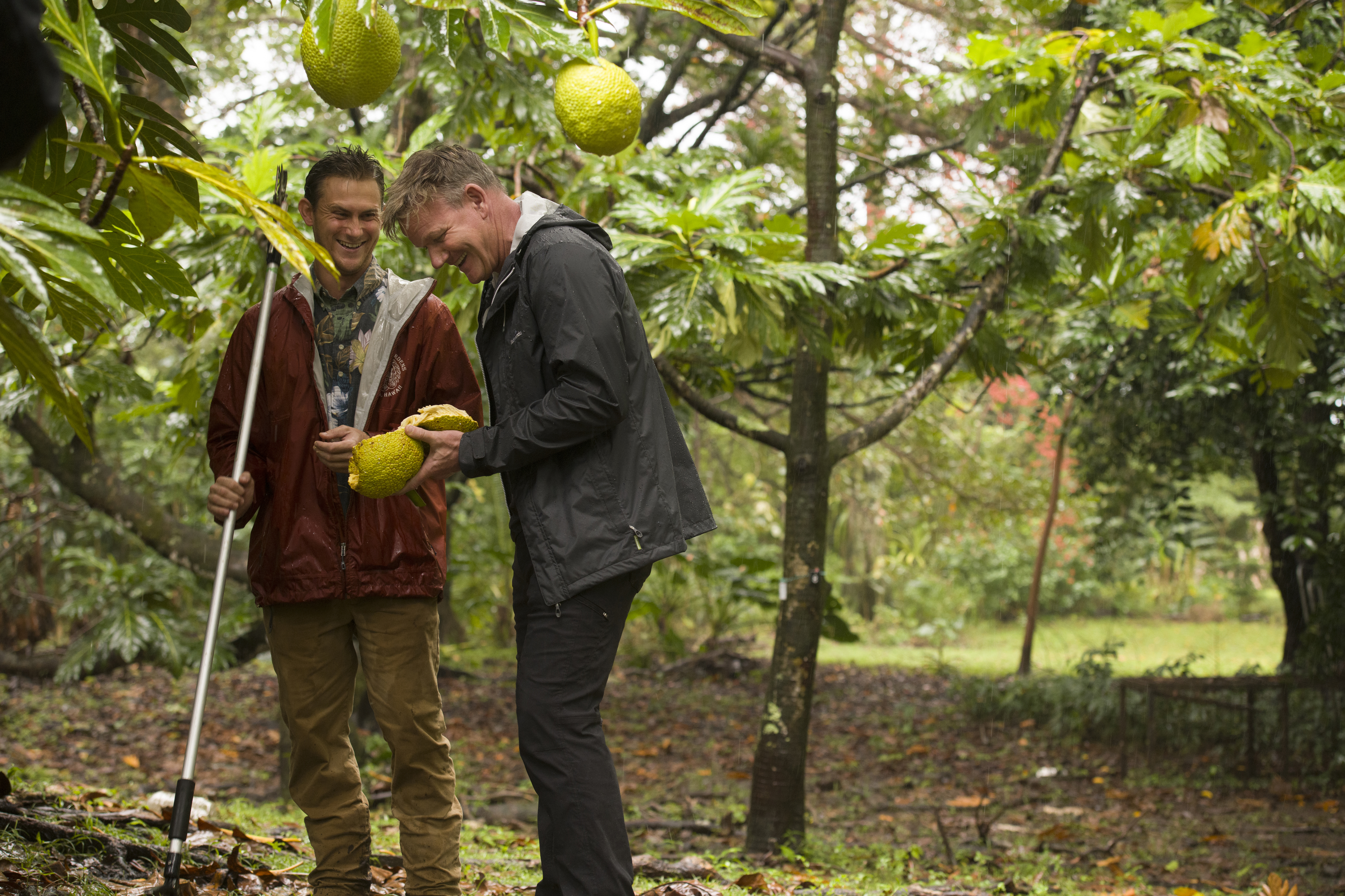 Hawaii - Mike (L) introduces Gordon Ramsay to breadfruit, a fruit that can be used as a vegetable. (National Geographic/Michael Muller)