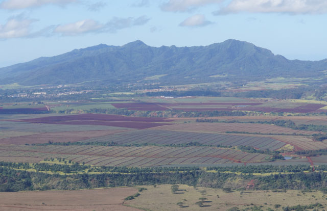 Wahiawa Agriculture with Waianae Mountains.