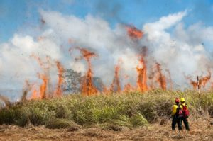 Experts Forecast A Destructive Wildfire Season In Hawaii This Year