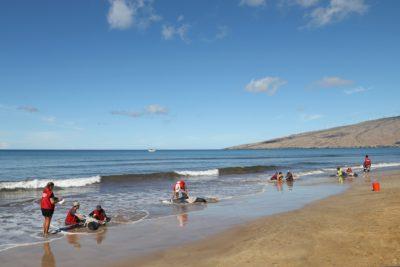 4 Stranded Whales Euthanized On Maui Beach