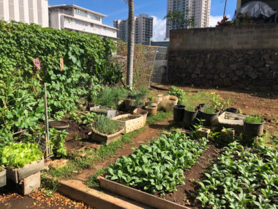 Sterling Higa: The Big Loss Of A Small Garden - Honolulu