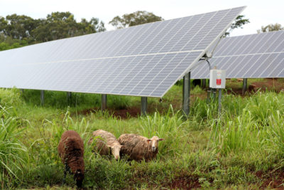 Do We Want More Local Food Or Cheaper Power? Two Hawaii Priorities Conflict