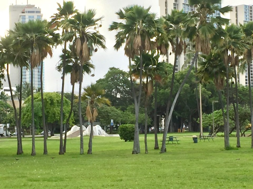 Funders Abandon Ala Moana Playground Plans, Pivot To Kakaako