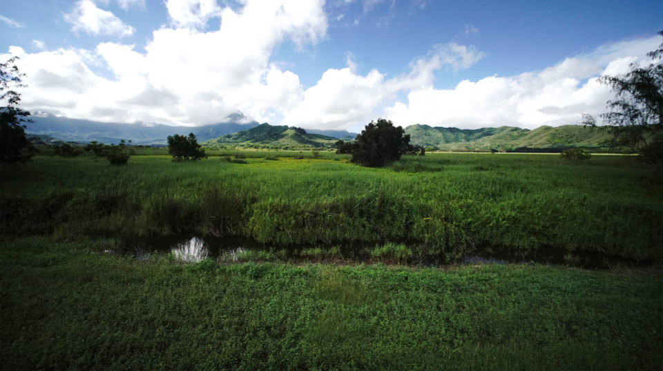 Restoring Kaiwainui Marsh After Years Of Neglect Is Not As Easy As It Could Be