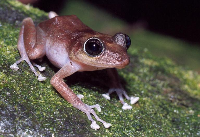 Tom Yamachika: Why Hawaii Needs An Effective Invasive Species Inspection Fee