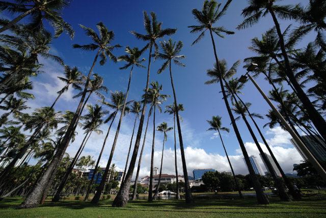 Ala Moana Beach park with towering coconut trees.