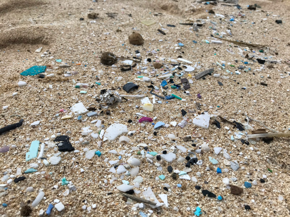 What Are The Long-Term Impacts of Microplastic Pollution in Hawaii?