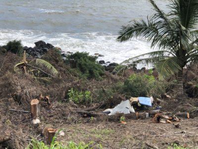 Kauai tree clearing