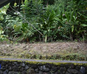 Big Island: Council OKs Ban On Roundup And Other Herbicides On County Land