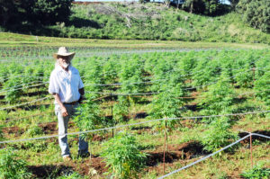 Kauai: Hemp Growers Battle Both State Restrictions And Medical Skeptics