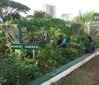 Maria Pena (left) and Cory Edano (right) pull weeds from a plant bed of the Makiki Community Garden in Honolulu, HI, February, 15, 2020.  The two Makiki residents started  gardening here two years ago. Each person recieves a small plot of their own to cultivate and participates twice a year to maintain the common gaden areas as well.  (Civil Beat photo Ronen Zilberman)