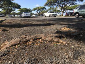 Repaving Of Magic Island Parking Lot To Begin Monday