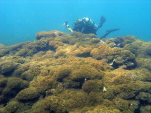 The Latest Threat To Hawaii's Coral Reefs: A New, Aggressive Algae Species