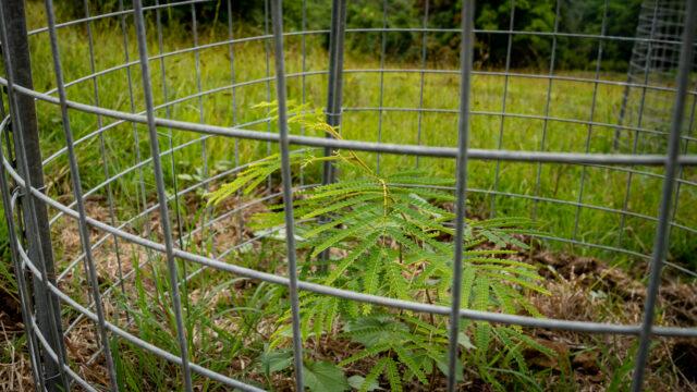 Watersheds Agriculture Kualoa Ranch Doughnut Cage Koa Close
