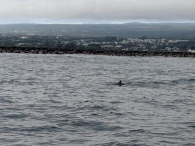 Fixing Century-Old Breakwater Could Bring Marine Life Back To Hilo Bay