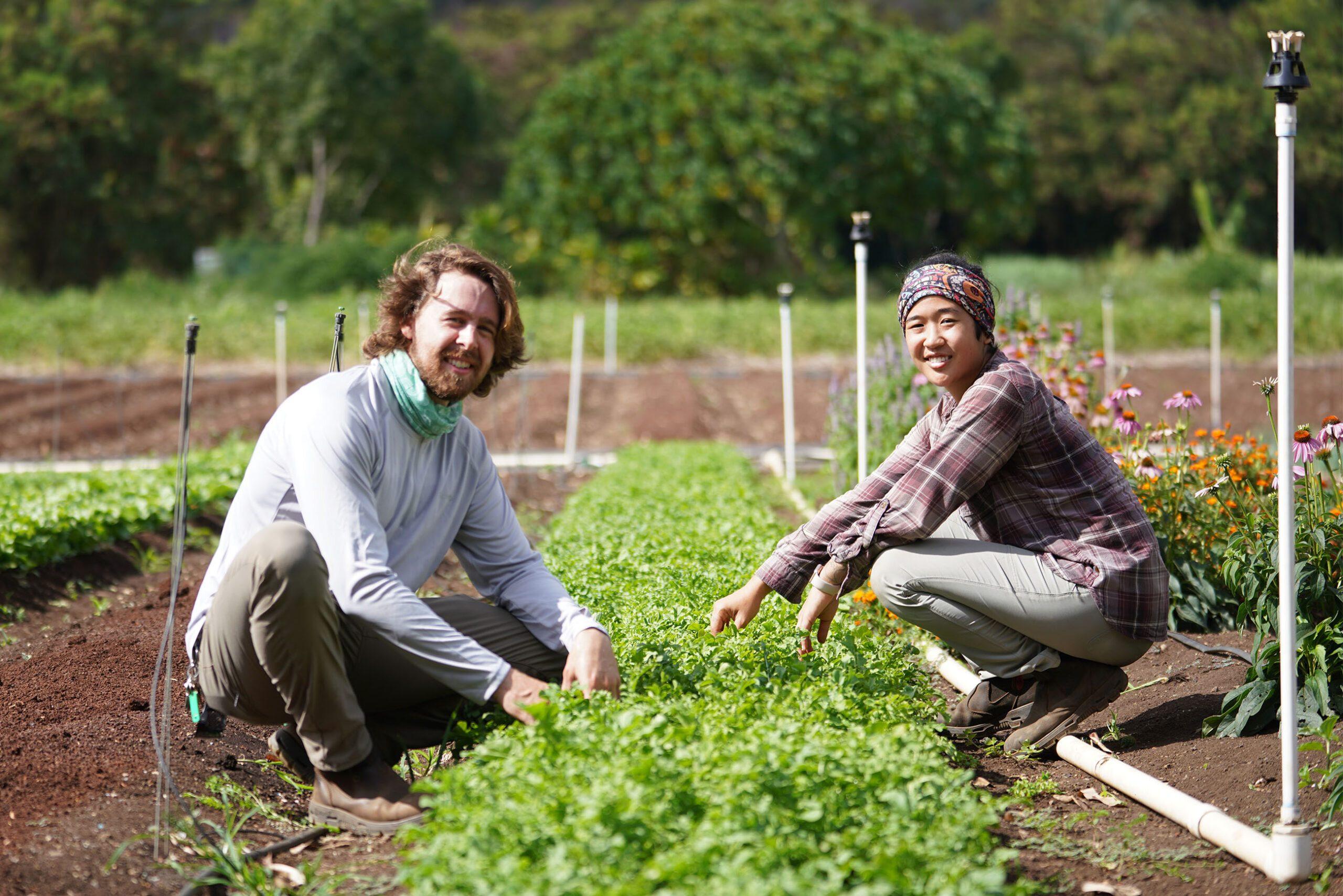 Ahiki Acres farmers Haley Miyaoka and Matthew McKinnon on their farm located in Waimanalo.