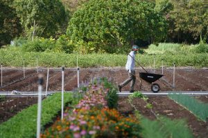 PODCAST: Two Ideas For How To Build More Housing For Hawaii Farmers