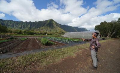 Ahiki Acres farmer Haley Miyaoka stands fronting their plot of land in Waimanalo.