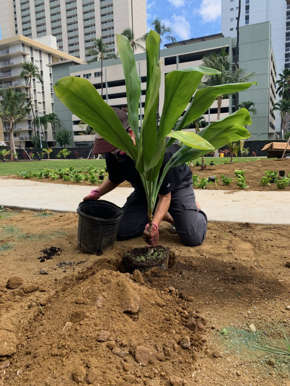 The Rotary Club and local dignitaries planted a variety of greenery at Honolulu's Centennial Park. (Photo: Courtesy Council member Kym Pine)