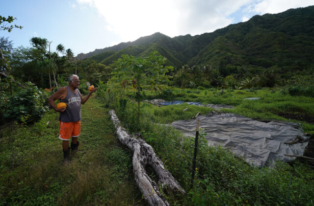 James Anthony holds a giant papaya from his tree that he just picked on their couple of acres of land located in Kahana Valley.