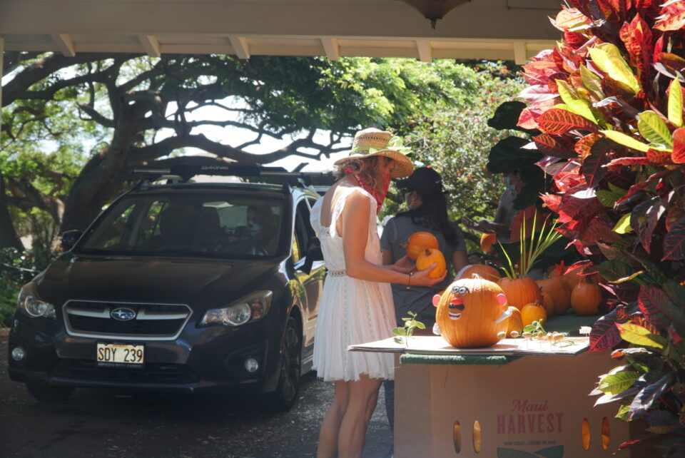 The drive-through Mahi Pono Fall Festival at Yokouchi Family Estate on Maui sold pumpkins and other items as a fundraiser. Net proceeds from all pumpkin sales will benefit Imua Family Services and its community-based program that serves Maui County families by providing resources that assist keiki with overcoming developmental learning challenges. (Photo: Maui Pono)