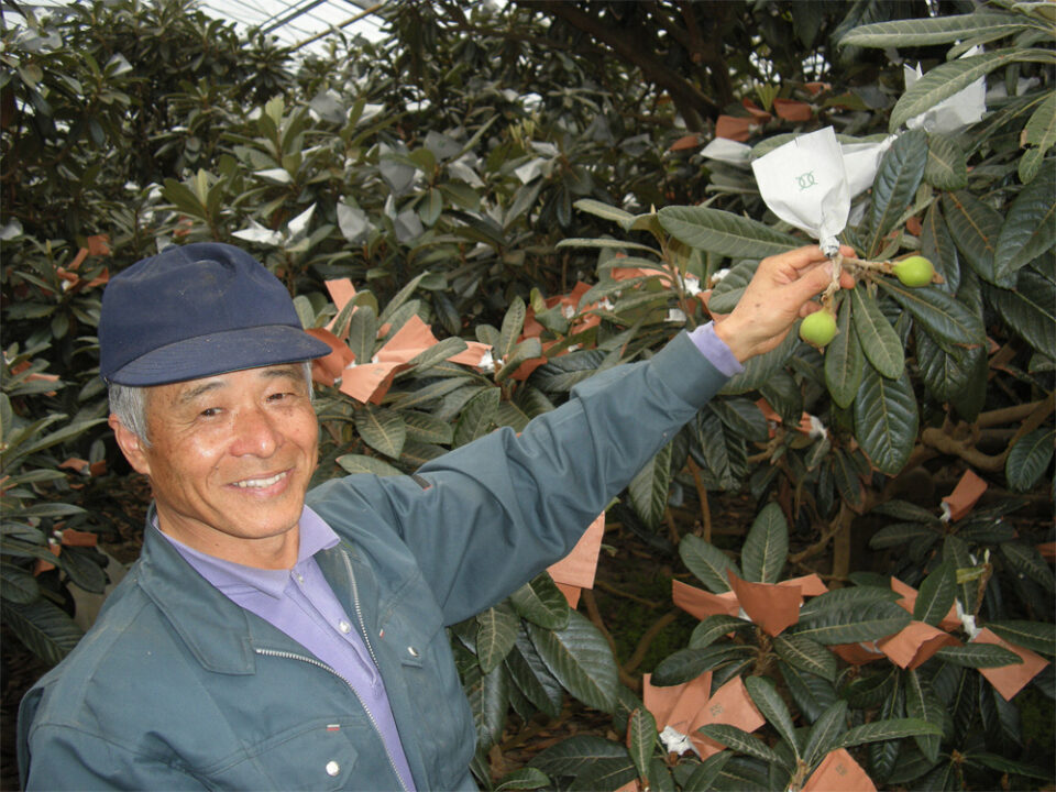 Hawaii Can Learn A Lot From Japan About Farming And Food Production