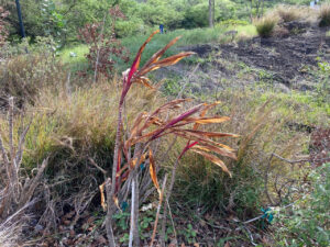 Denby Fawcett: These Native Hawaiian Plants Are Dying — Here's Why We Should Care