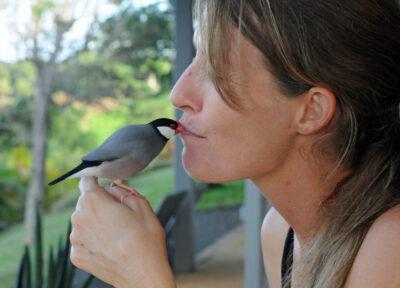 How A Kauai Java Sparrow Became Mr. Baby Snuggles
