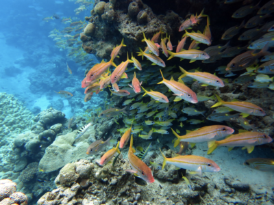 Let's Honor Our Pacific Marine Monuments By Building On Their Legacy