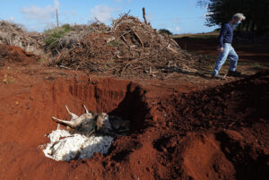 Molokai's Fabled Axis Deer Are Starving To Death In Droves