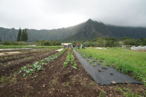 The State Does A Lot To Help Farmers In Hawaii. But It's Not Enough