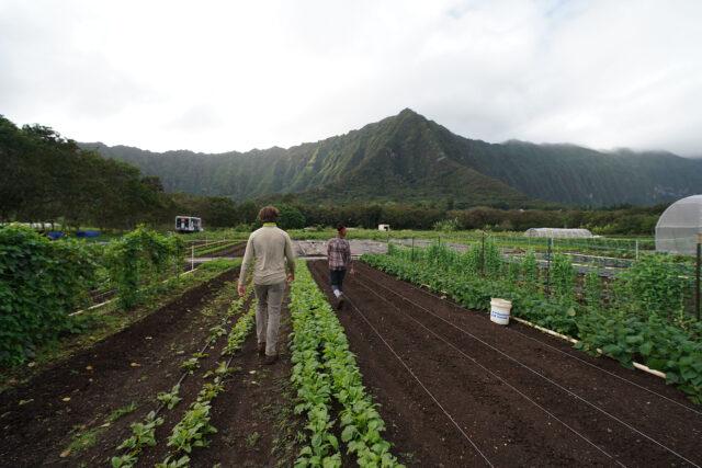UH Waimanalo farming.