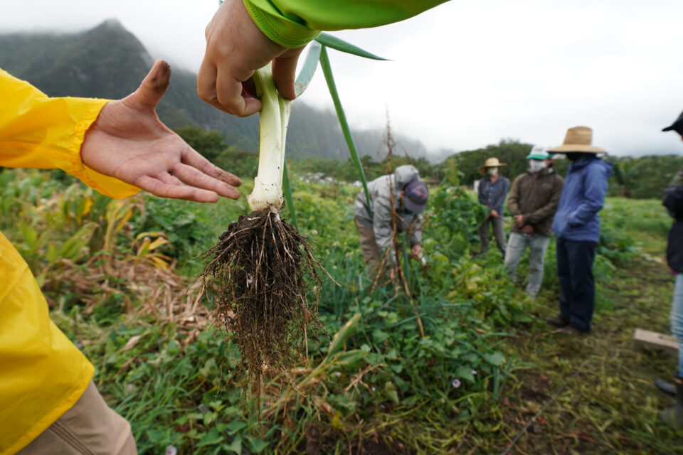 PODCAST: What Will It Take For Hawaii To Grow More Of Its Own Food?