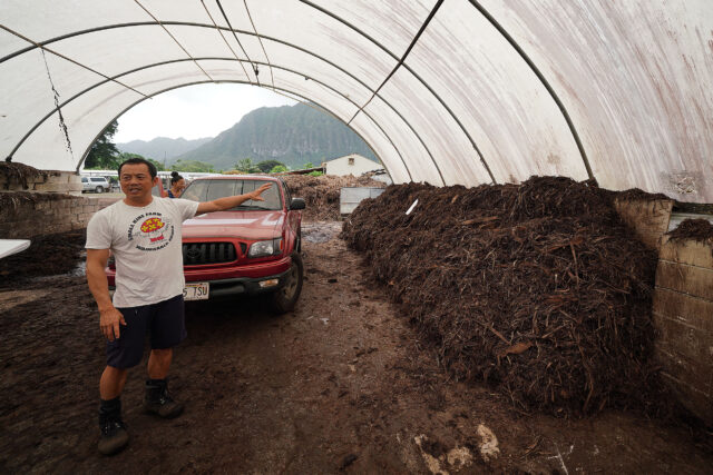 Small Kine Farm's Fung Yang stands near the compost that he grows his Portabello's on in Waimanalo.