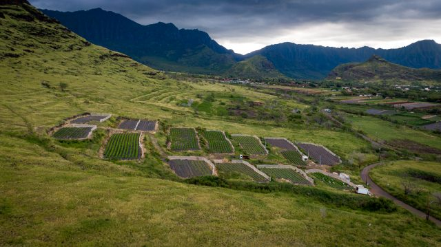 Waianae Agriculture Park Mauka Hawaii Grown