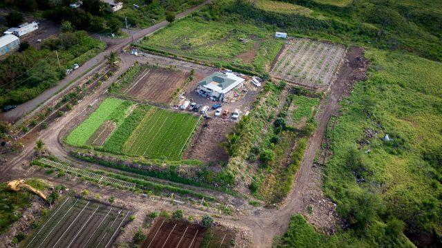 Waianae Agriculture Park Hawaii Grown