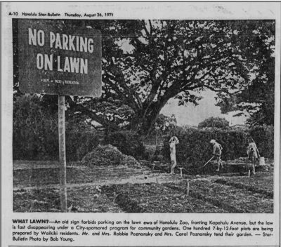 A newspaper photo shows Waikiki residents tending to their community garden plots in front of the Honolulu Zoo in 1976. The original caption reads: What Laws? An old sign forbids parking on the lawn ew of Honolulu Zoo, fronting Kapahulu Avenue, but the law is fast disappearing under a City-sponsored program for community gardens. One hundred 7-by-12-foot plots are being prepared by Waikiki residents. Mr. and Mrs. Robbie Poznanzsky and Mrs. Carol Poznanzsky tend their garden. Star-Bulletin Photo by Bob Young.