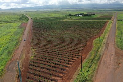 These 2 Companies Are Putting Big Money Into Hawaii's Agricultural Future. Will Their Bets Pay Off?