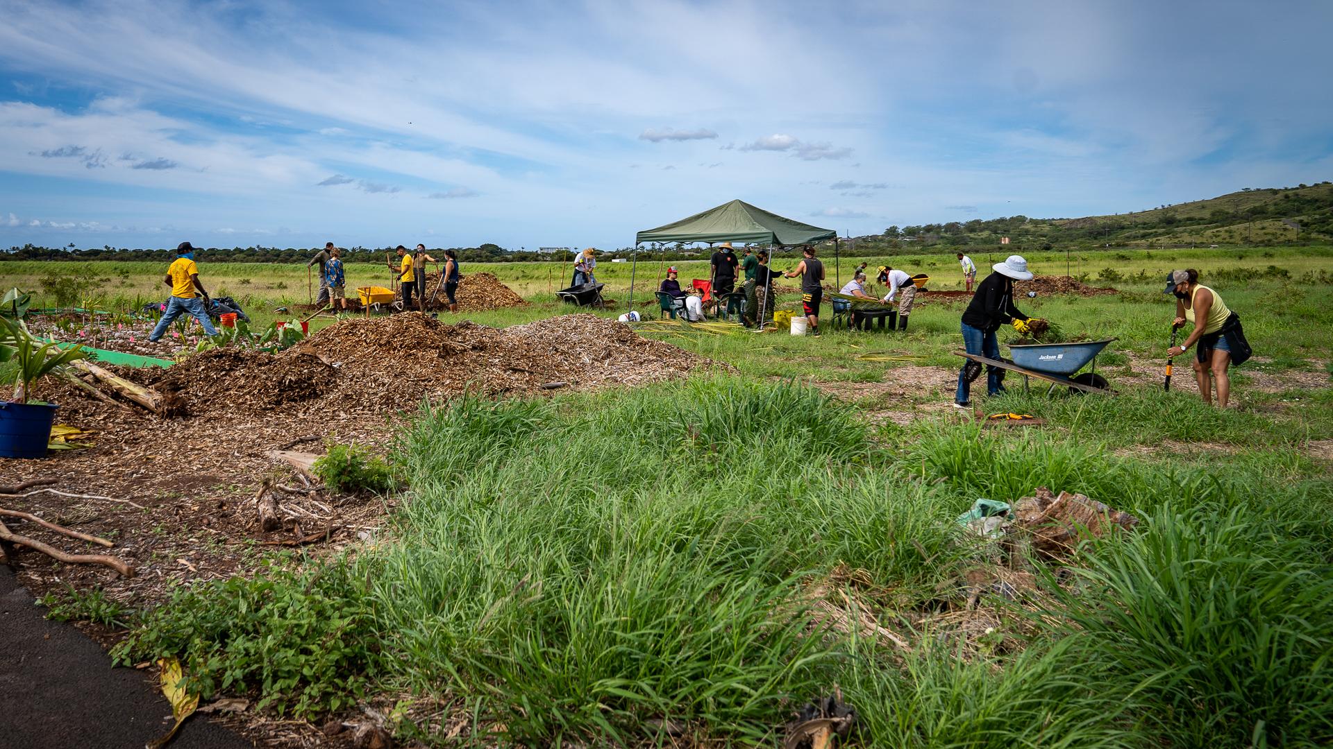 Westside Coconuts Niu Volunteers Wide