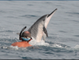 Will Hawaii's Spinner Dolphins Finally Get A Rest From The Crowds?