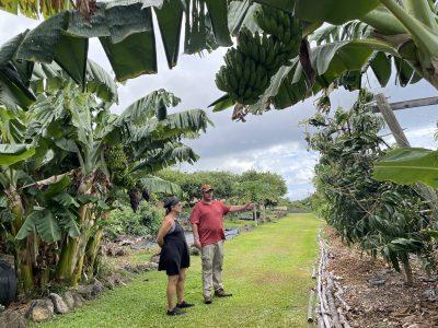 A Maui Farmer's Dream: Where Food, Not Fences, Separates The Homes