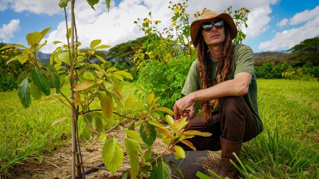 Hawaii Grown Hua Orchards Daniel Carroll
