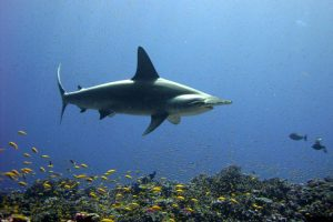 Hawaii Marks World Oceans Day With 9 New Laws To Protect Sharks And Marine Life