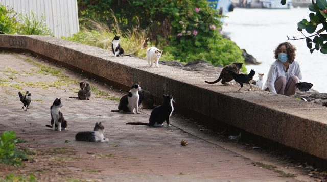Person who declined giving their name feeds cats at Kakaako Waterfront Park on the Diamond Head end of the park.