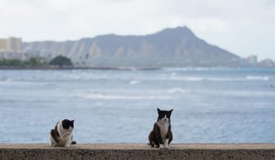 Cats sit on wall at Kakaako Waterfront Park with Diamond Head in the background.